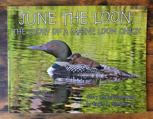 June the Loon: The story of a Maine loon chick - Book