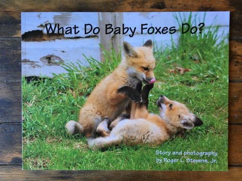 What Do Baby Foxes Do? - Book