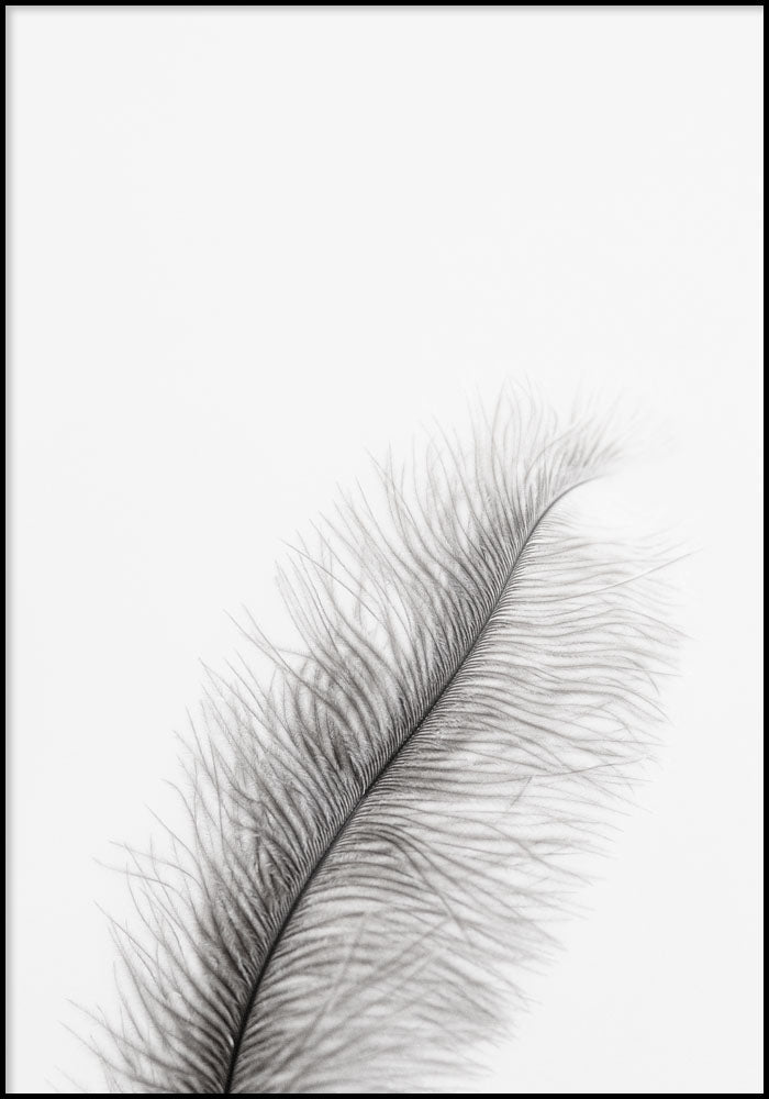 Juliste Feather