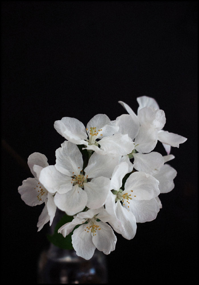 Juliste Apple Tree Flowers
