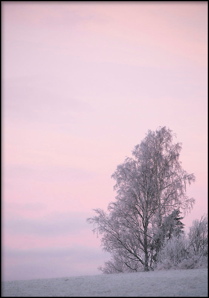 Juliste Winter Dawn
