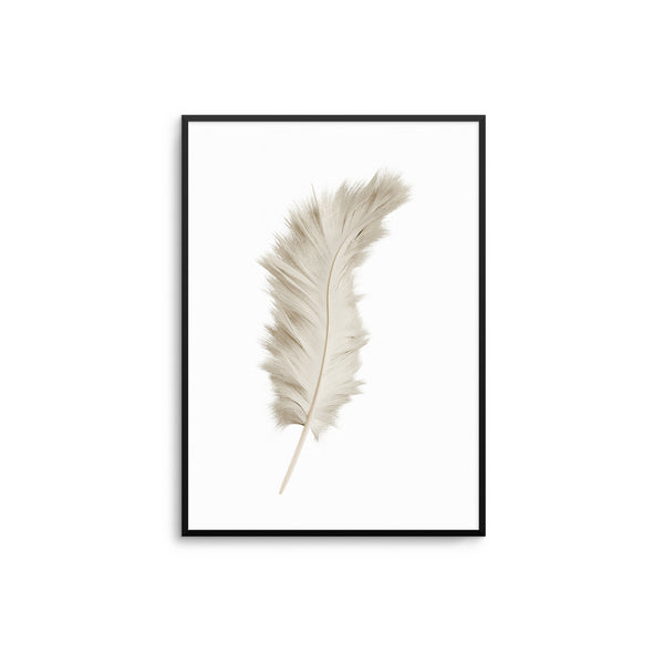 Beige Feather