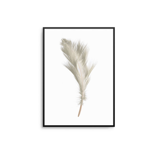 Beige Feather II