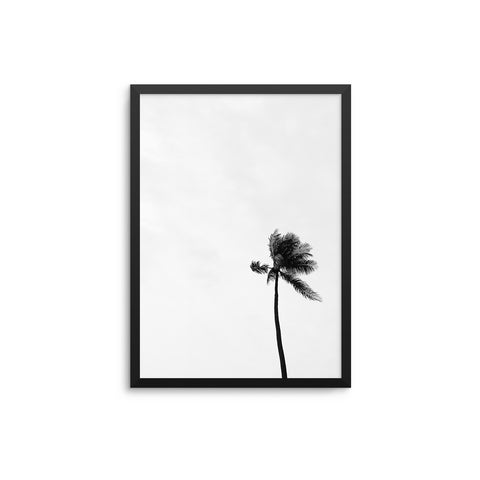 Single Palm Monochrome