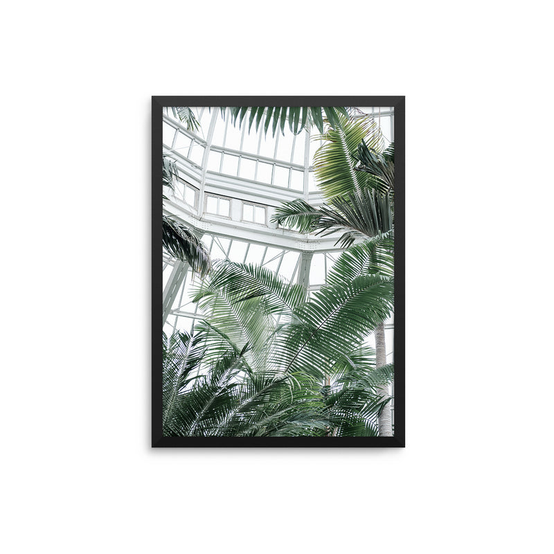 Greenhouse Palms