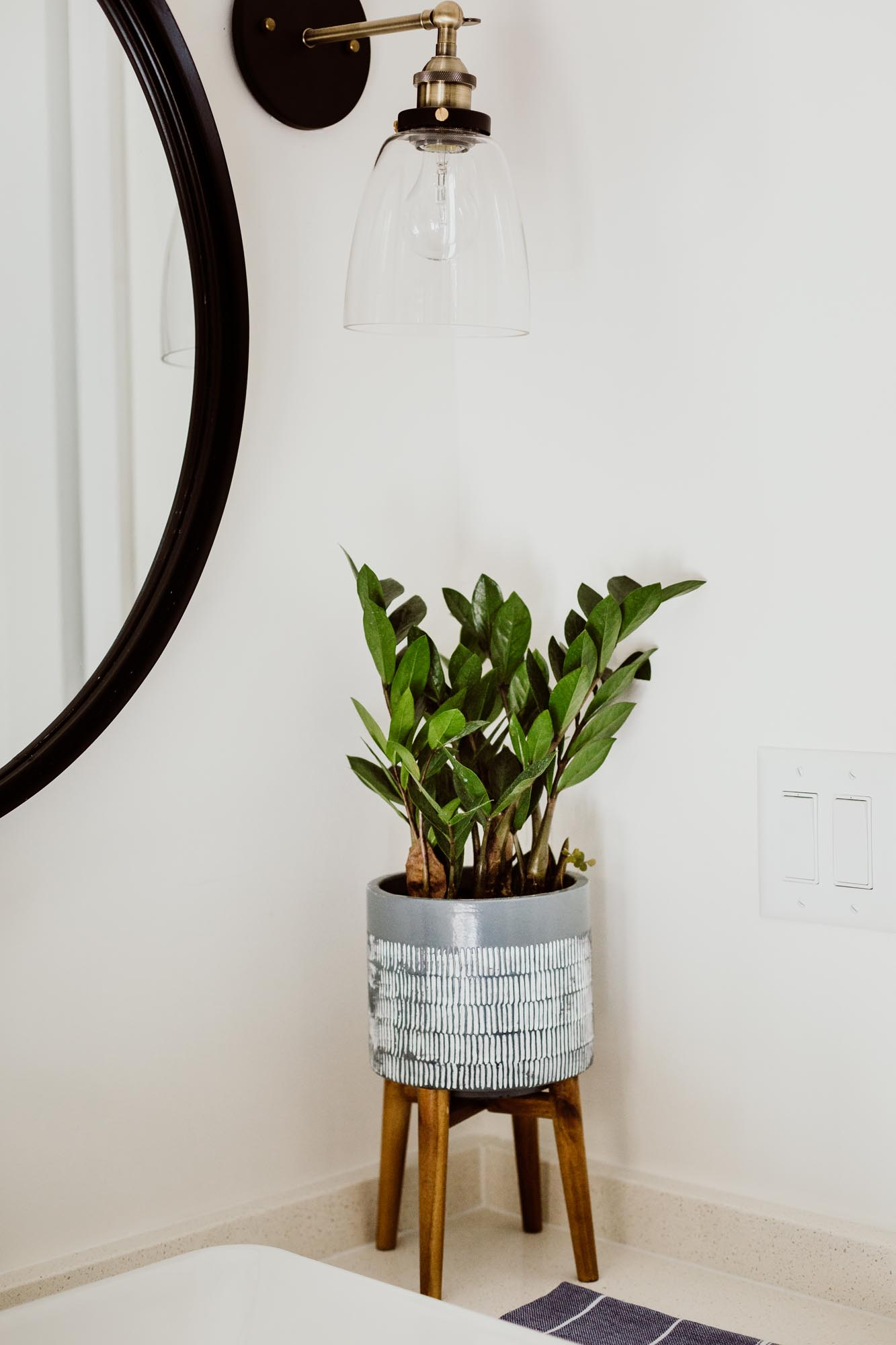 plant in corner of whipped wall