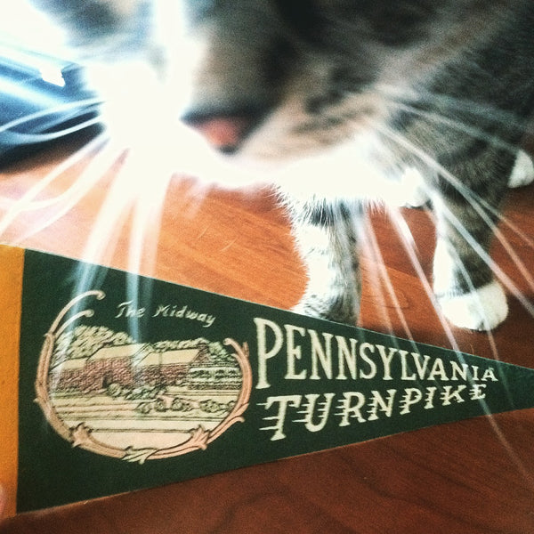 cat with Pennsylvania Turnpike pennant
