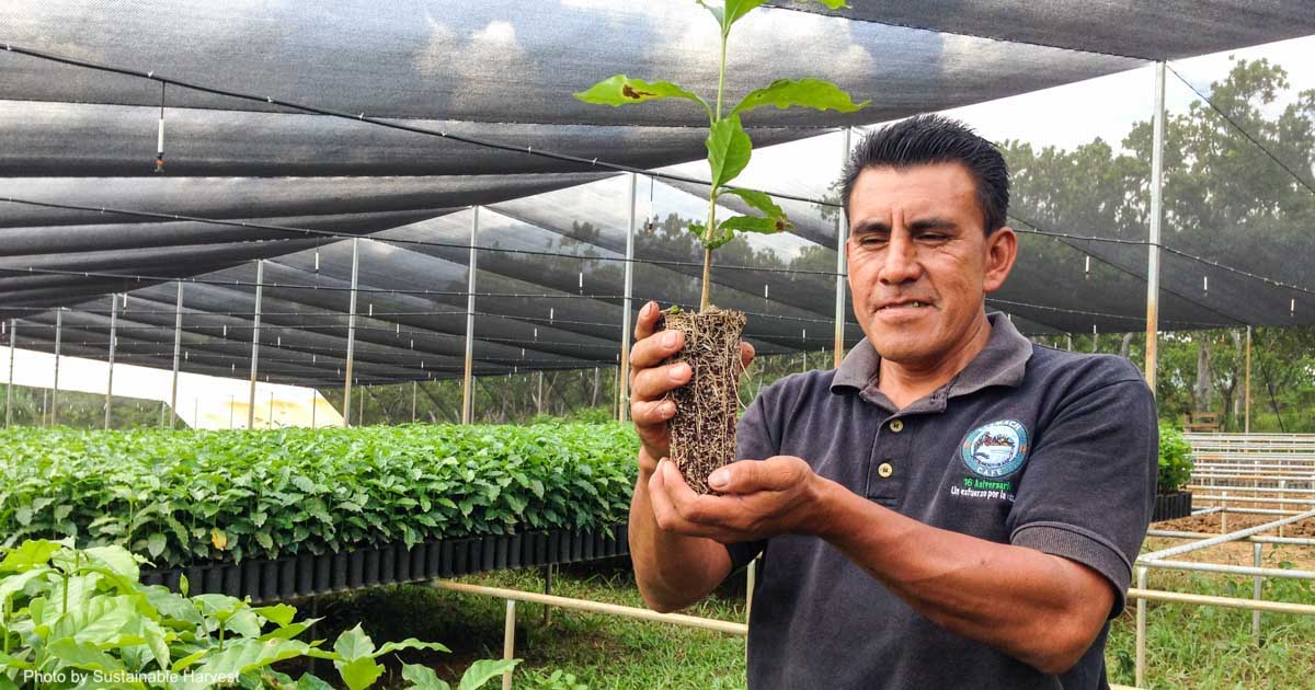 Mexican organic coffee famer