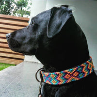 Makan Medium Leather Dog Collar for medium breed Labrador