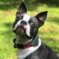 Small Leather Dog Collar for small breed French Bulldog