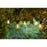 Tobias Festival Lights Starter Set Clear Decorative