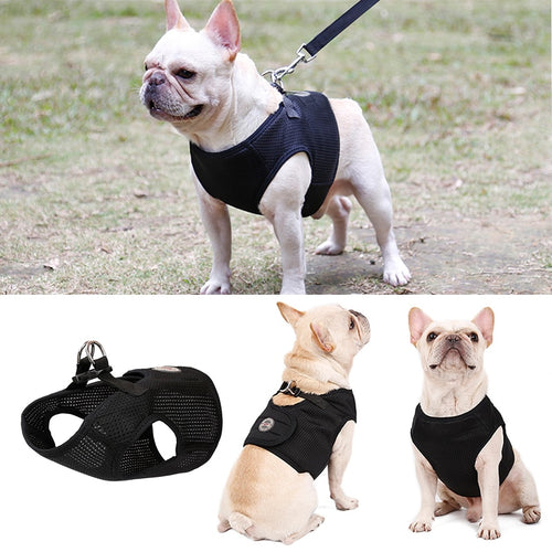 Frenchie Corner® Vest Harness & Leash