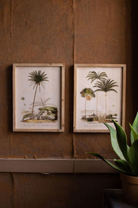 Set Of 2 Framed Palm Tree Prints Under Glass