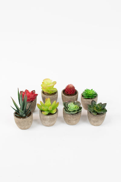 Set Of 8 Miniature Succulents