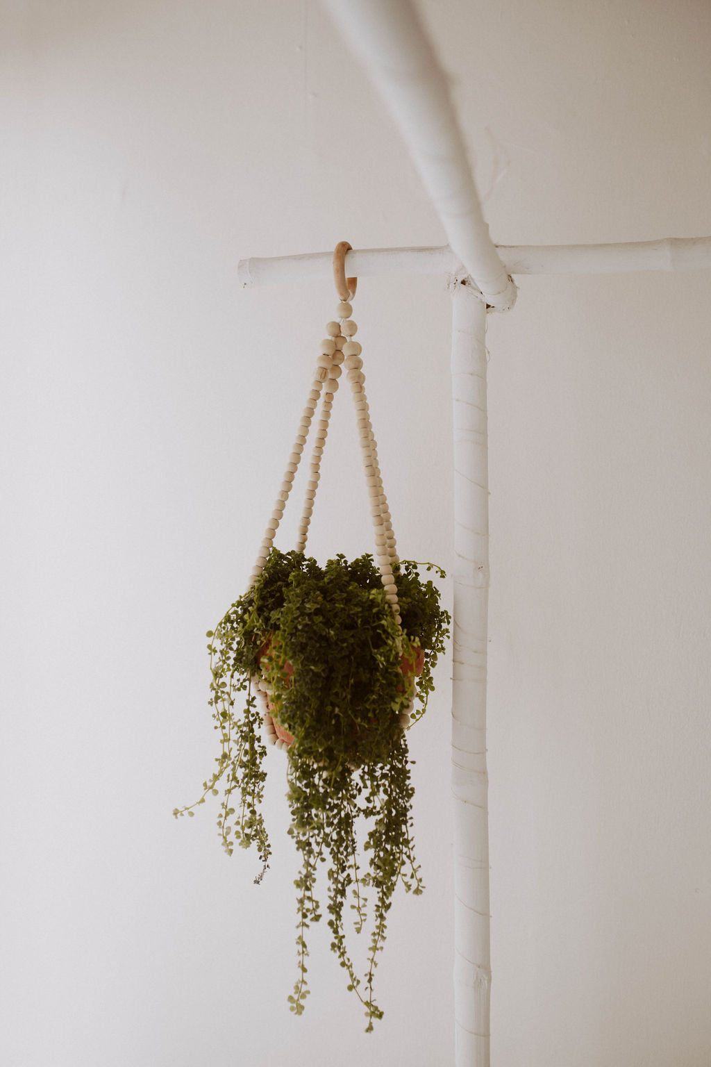 Coffee Wood Plant Hangers