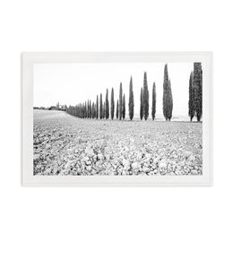 TUSCANY CYPRESS // BLACK AND WHITE
