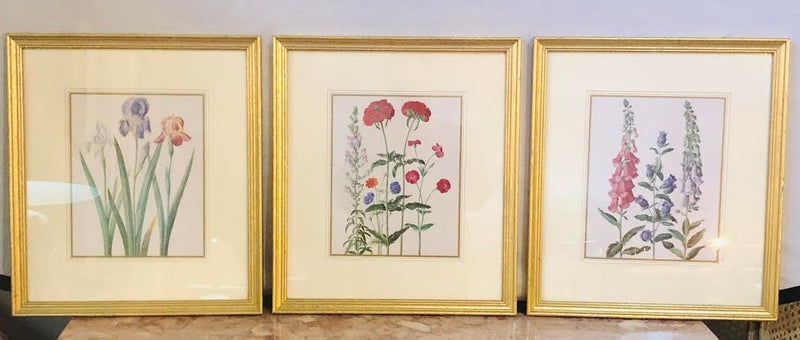 Traditional Floral Botanical Prints - Set of 3