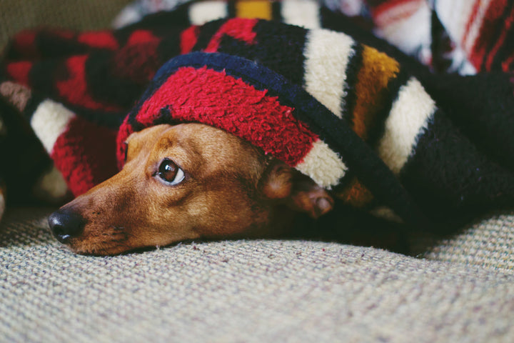 Are Fireworks Causing Anxiousness In Your Dog?