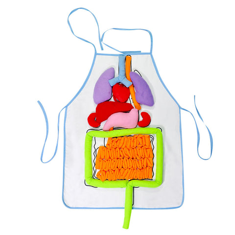 Children Education Bib Apron Kindergarten Viscera Teaching Utensil Kids Educational Intellectual Development 3D Organ Apron