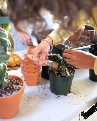Tula Plants & Design founder Christan Summers pots a Pachycereus Marginatus crested, a rare collector cactus for sale.