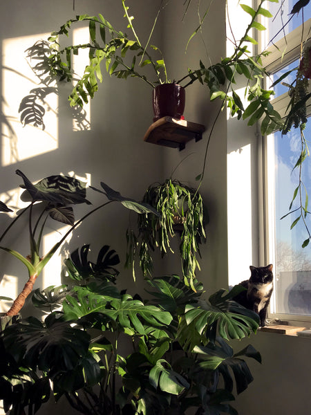 The private collection of Tula Plants & Design founders, receiving direct sunlight on a chilly winter morning.