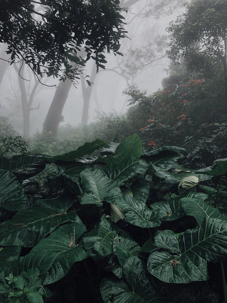 A Cloud Forest, or Montane Forest, which receives nearly constant rainfall or fog.