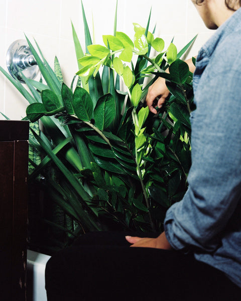Cleaning a plant to prevent pests at Tula Plants & Design.
