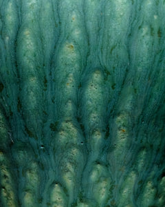 Uncurling Fern Turquoise #3