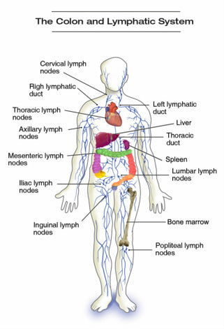 colon & lymph , colymph system, colymph herb
