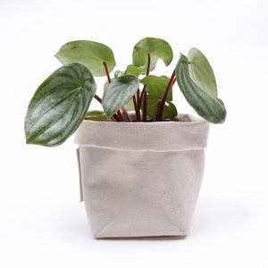 "Canvas Planter for 4"" plant"