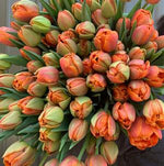 Fall 2020 Tulip Collection