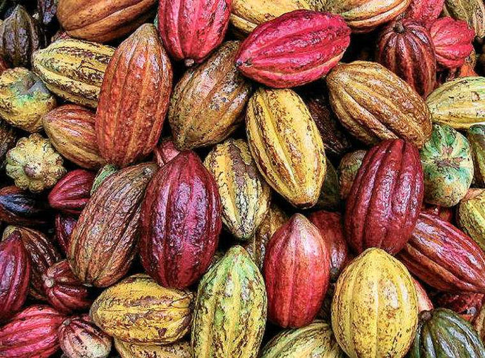 Cacao Knowledge - Starting from a point of curiosity