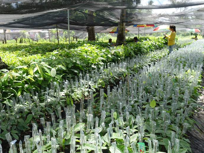 Cacao Seedling Nursery Training - Conducted by Bureau of Plant and Industry (BPI)