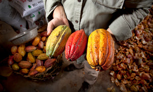 From Pomelo to Cacao - Climate change forced a Davao farm towards cacao