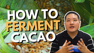 How to Ferment Cacao Beans