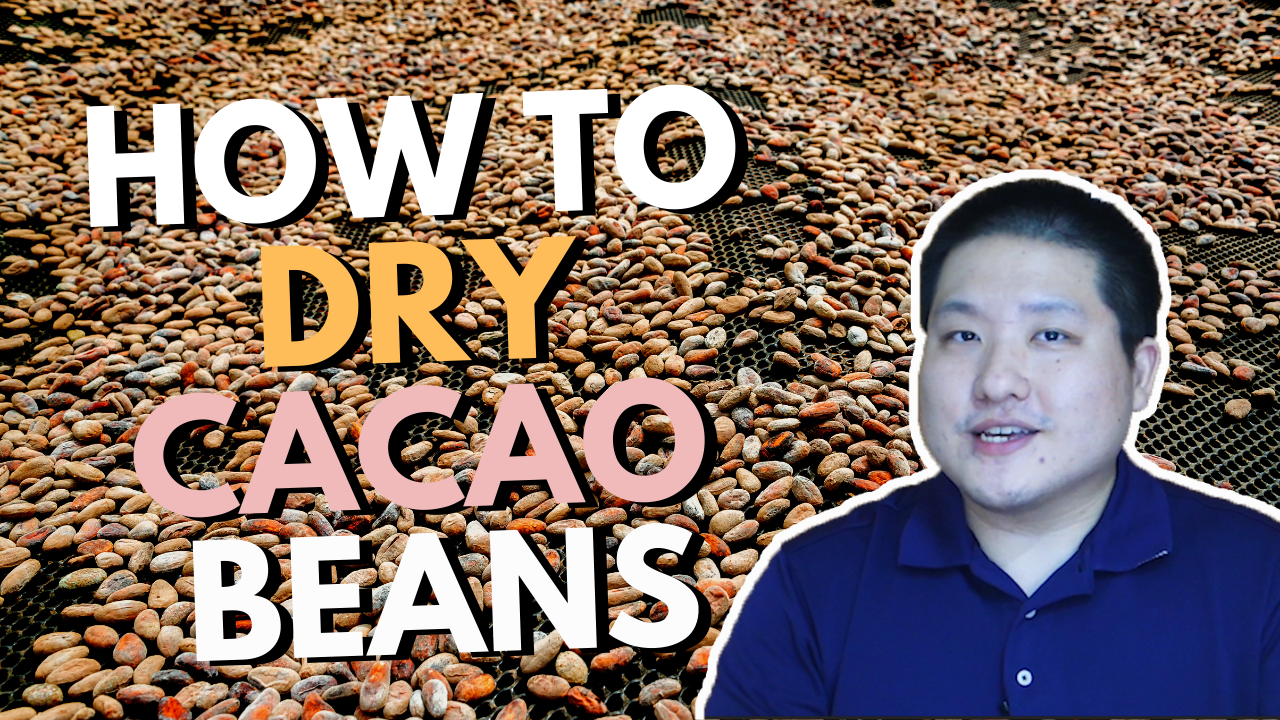 How to Dry Cacao Beans