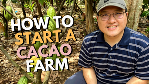 How to Start a Cacao Farm