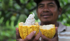 Pursuing Cacao in Eastern Samar - Agencies encourage farmers to get serious with cacao