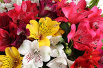 Assorted Alstroemeria Box