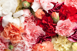 Colombia Direct - Assorted Spray Carnations