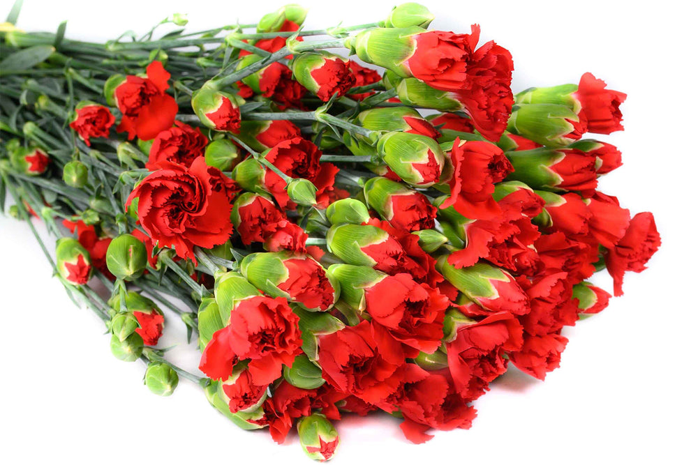 Red Spray Carnations Box