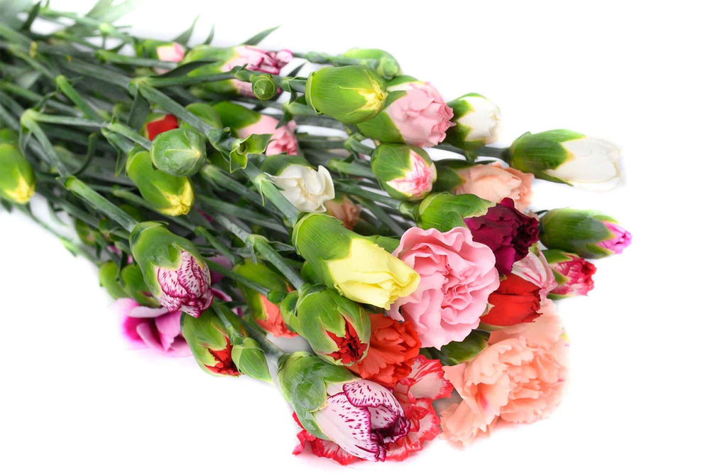 Assorted Spray Carnations Box