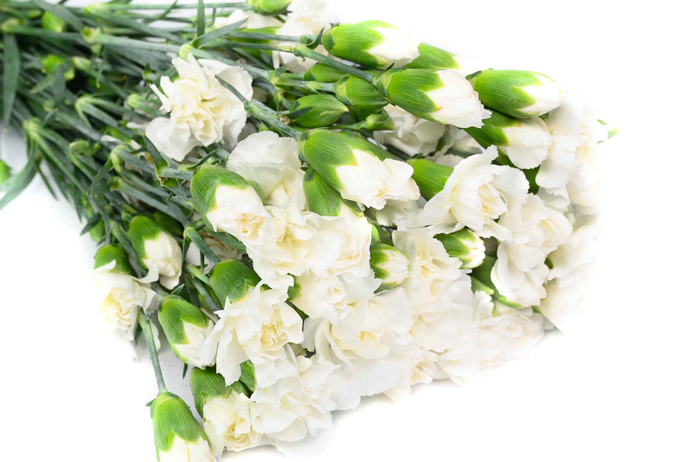 White Spray Carnations Box