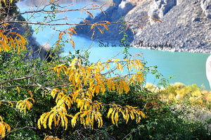 Yellowing Leaves On The Pretty Snake River