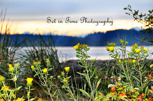 Yellow Wild Flowers With Pretty Lake And Mountains