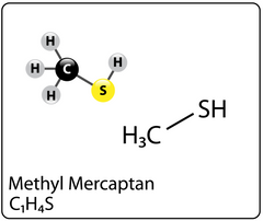Methyl Mercaptan molecule