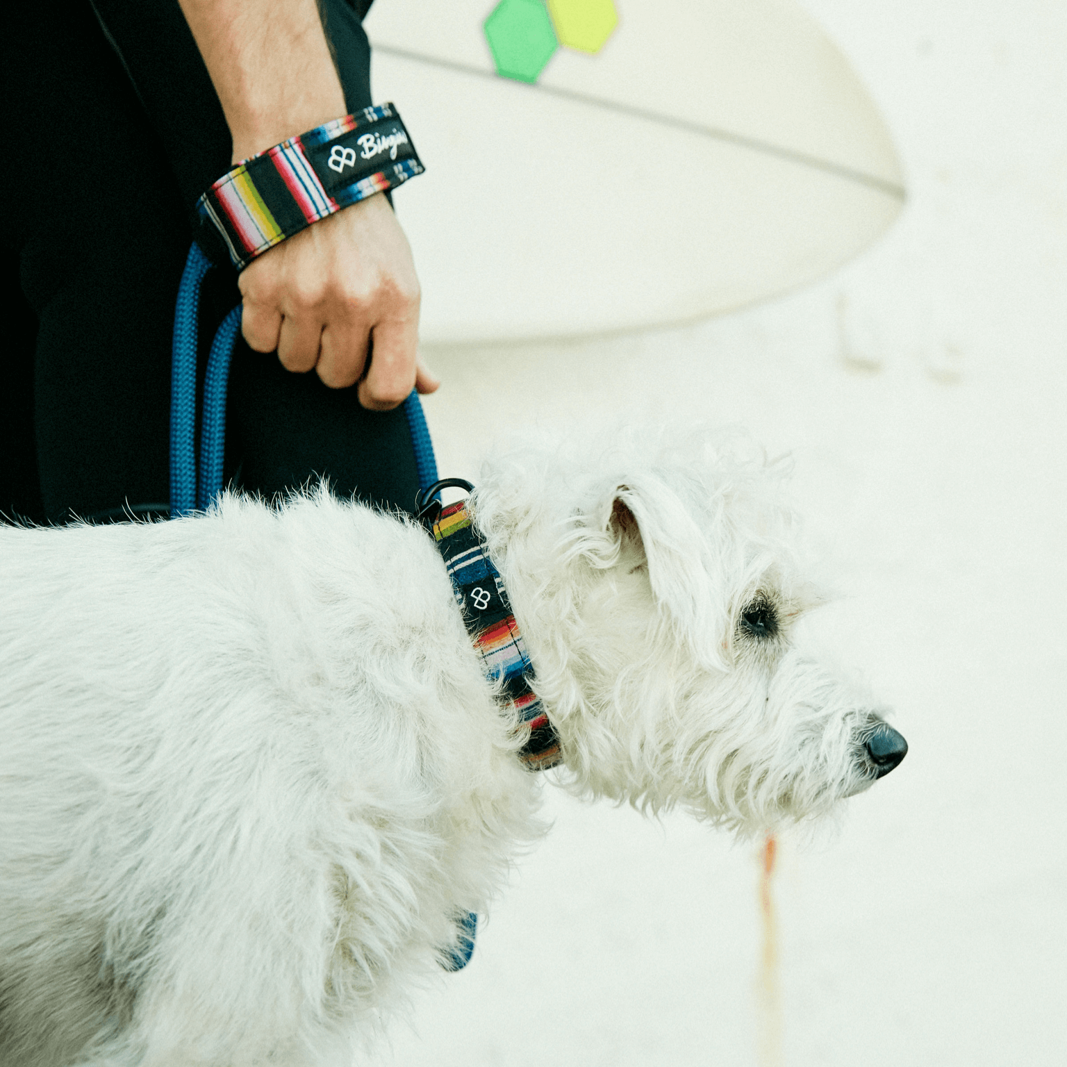 Surfer's Jack Russell Terrier wearing the Bingin Dog 'Los Amigos' waterproof dog collar and matching surf-style rope leash set.
