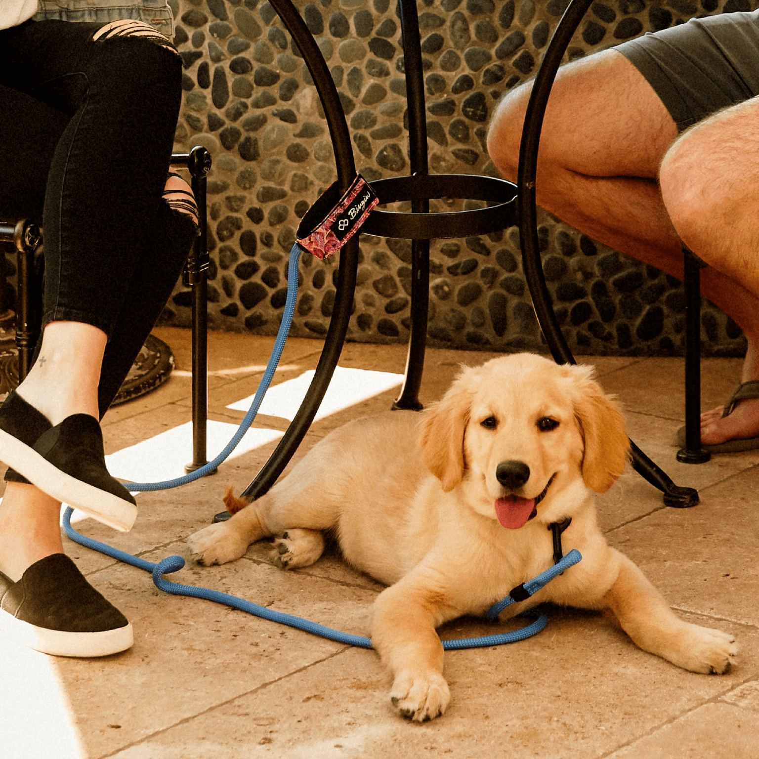 Bingin Dog 'Hanalei' surf-style dog leash tethering a Golden Retriever puppy to a table at Urth Caffe in Laguna Beach.