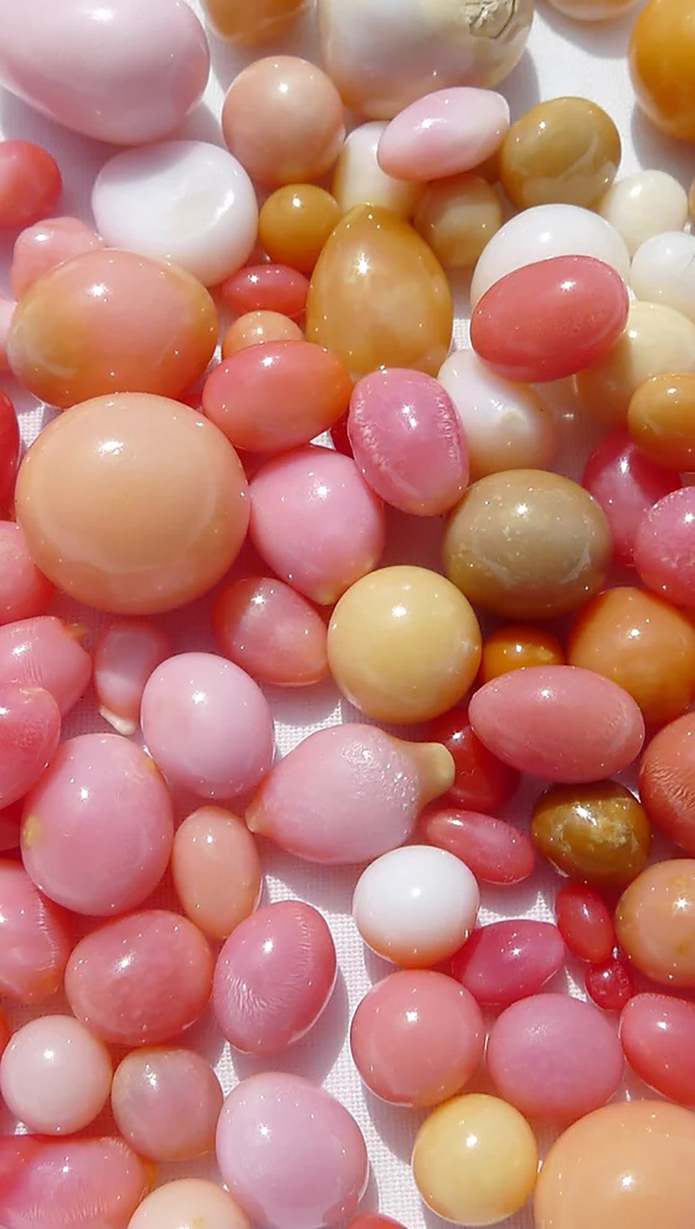 What are Conch Pearls?