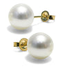 White Freshwater Pearl Earrings, 10.5-11.0mm, 14K Yellow Gold Version
